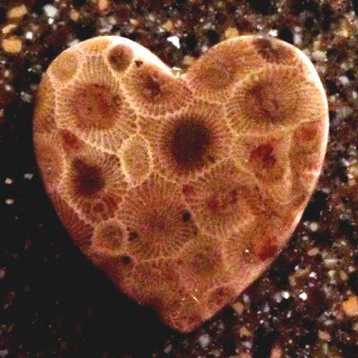 Heart-Petoskey-Stone-Magnet
