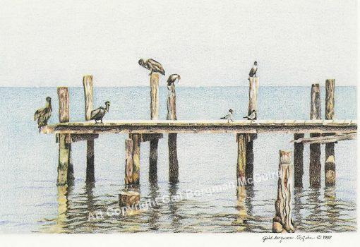 pelicans_large