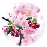 Round Cherry Blossom
