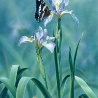 Spring Glory Giclee Print on Wrapped Canvas by Artist Russell Cobane