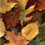 Vertical Fall Leaves Photo Cutting Board
