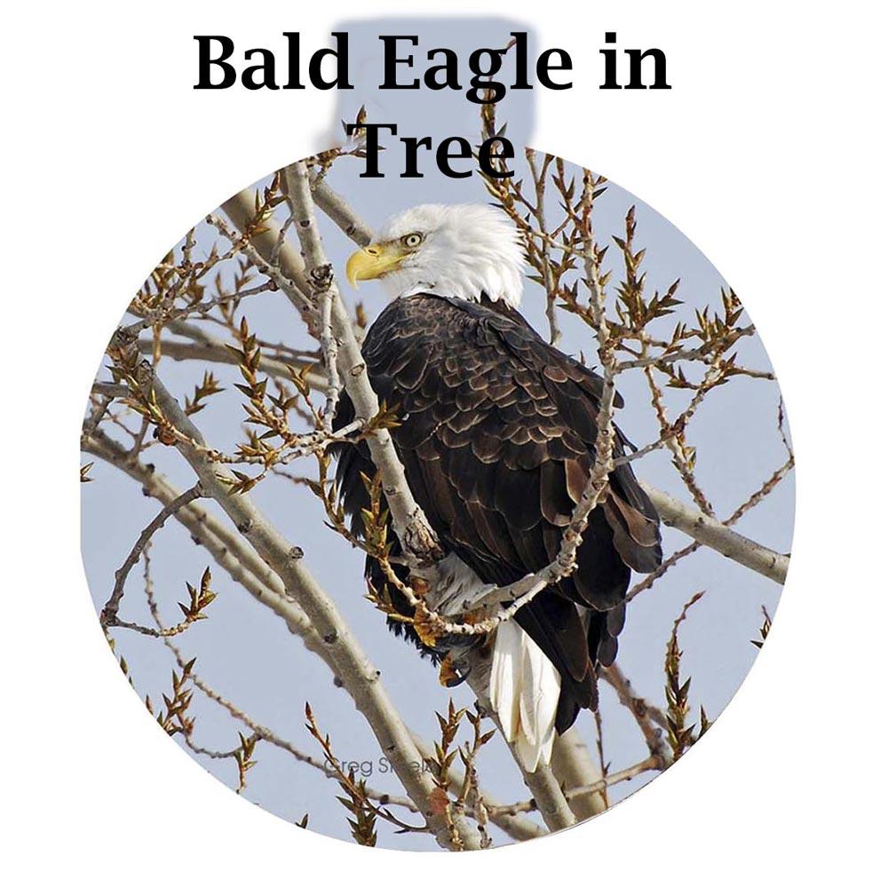 Metal Photo Ornament Bald Eagle In Tree