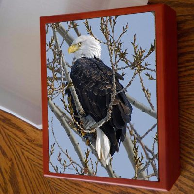 Photo Tile Keepsake Box Bald Eagle